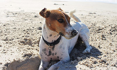 Latest news on taking pets on holiday to Europe