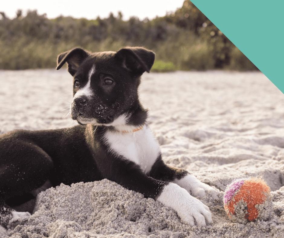 beach-dog