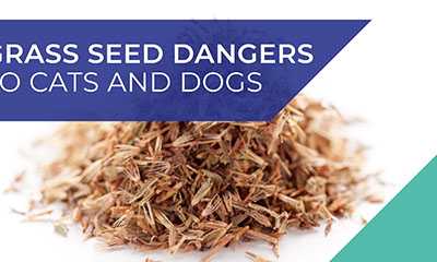 Grass seed dangers