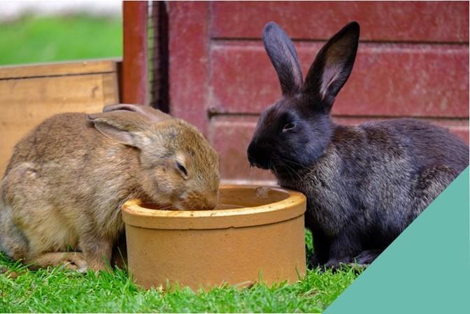 Rabbit-Happy